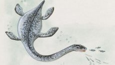 A plesiosaurus,  the dinosaur some believed Nessie may have been a descendant of
