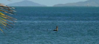 Loch Ness Monster Australia