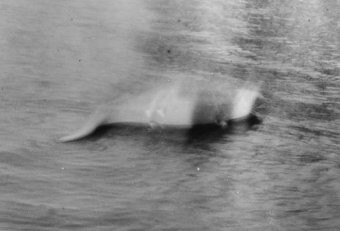 Loch Ness Monster and other myths