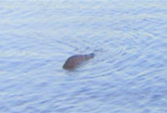 Loch Ness Monster picture fake