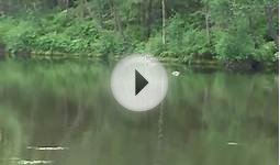Loch Ness Monster AMAZING FOOTAGE