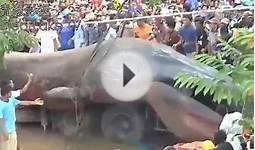 Must See!! REAL MONSTER found in vietnam
